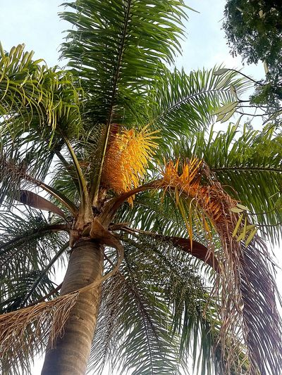 Green Plants 🌱 Plant Green Color Planting Plants Sensibility Tree Sun Sunrise Nature Coqueiros