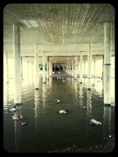 Lake Under The Bridge Graffiti Mallards