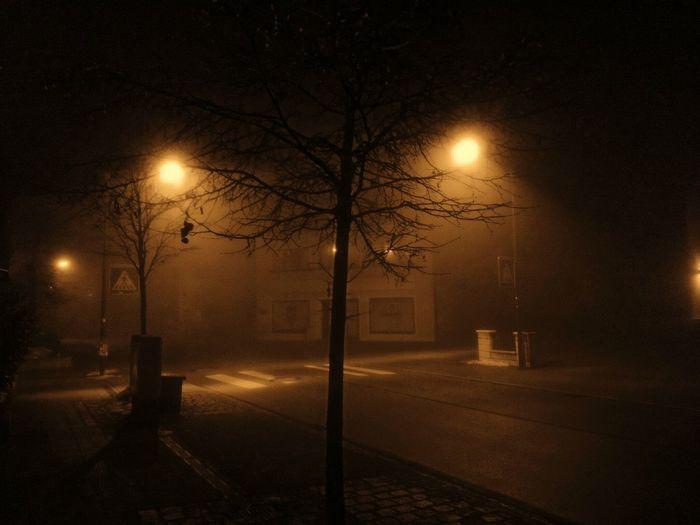 Tree Night No