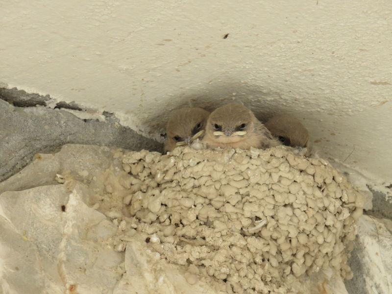 Beak Beauty In Nature Birds Clay Land Nature Nest Nesting Birds Outdoors Shallow Shallows Watcher Young