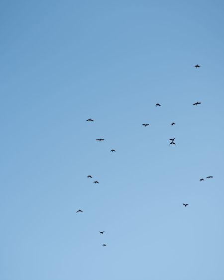 Ways Of Seeing Flying Animal Bird Sky Blue Flock Of Birds Clear Sky Nature Minimalism A New Beginning