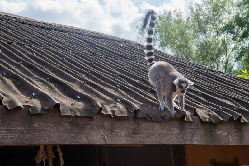 Low angle view of an animal on roof