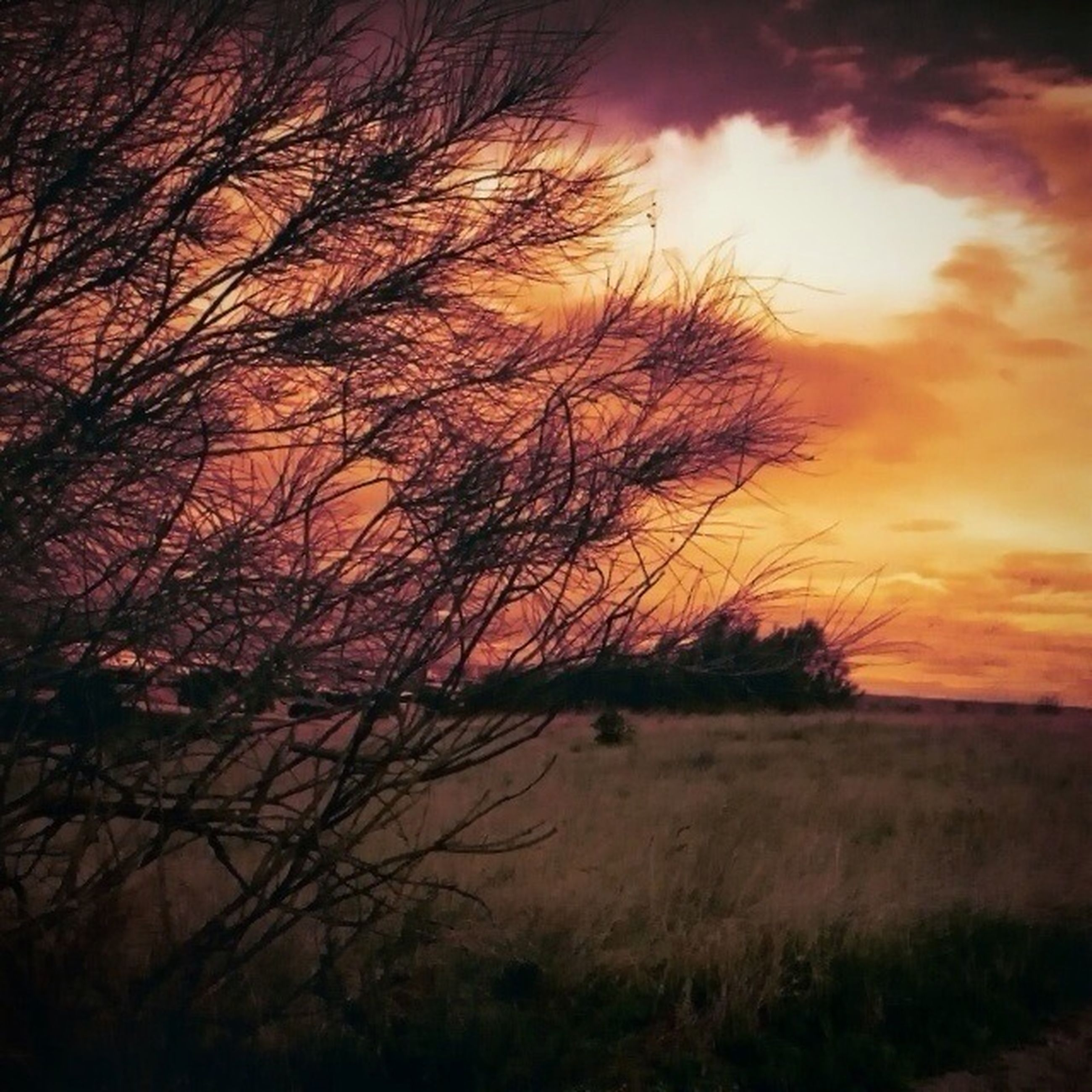 sunset, tranquility, tranquil scene, sky, silhouette, bare tree, scenics, tree, beauty in nature, orange color, nature, branch, cloud - sky, landscape, idyllic, non-urban scene, field, dramatic sky, growth, outdoors