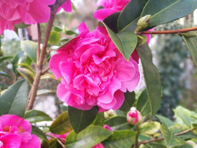 Flower Pink Color Nature Plant Petal Beauty In Nature Growth