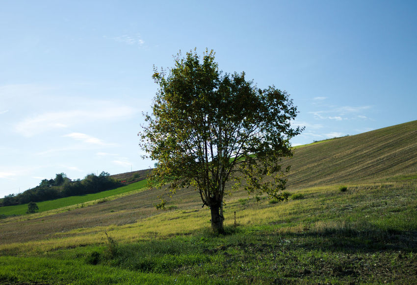 Landscapes in Marche Autumn Panorama The Week On EyeEm Tree Backgrounds Beauty In Nature Blue Sky Day Field Grass Landscape Nature No People Outdoors Scenics Sky Sun Tranquil Scene Tranquility Tree