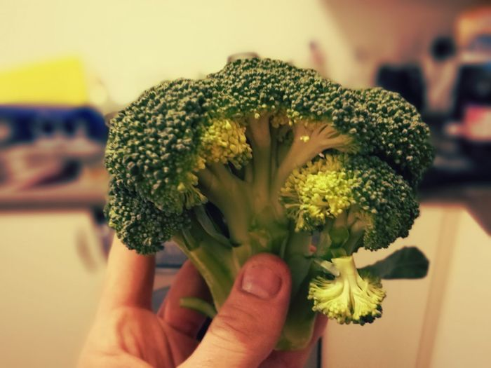Cropped hand holding broccoli in kitchen