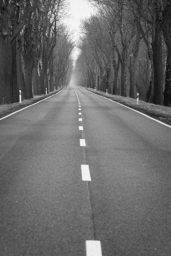 The road Road Asphalt Bare Tree Black And White Diminishing Perspective Empty Road Horizontal Marking Nature Road Road Lines Road Marking Straight Forward The Way Forward Transportation Tree Tree Line Tree Tunnel White Line