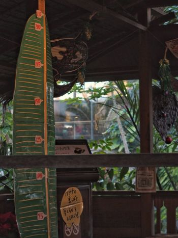 熱帯植物園 植物園 Botanical Gardens Nature Leaves🌿 Plants 🌱 Architecture Nature Photography Hello World Enjoying Life Taking Photos From My Point Of View Snapshots Of Life EyeEm Nature Lover Snapshot Industar-61 L/D 55mm F/2.8 Test Shot ロシアンレンズ 試し撮り このレンズ間違って買いはしたけれど、なかなか良い写りでやっぱり買ってよかったかもです。最短撮影距離1mはちとしんどいですが(^o^;