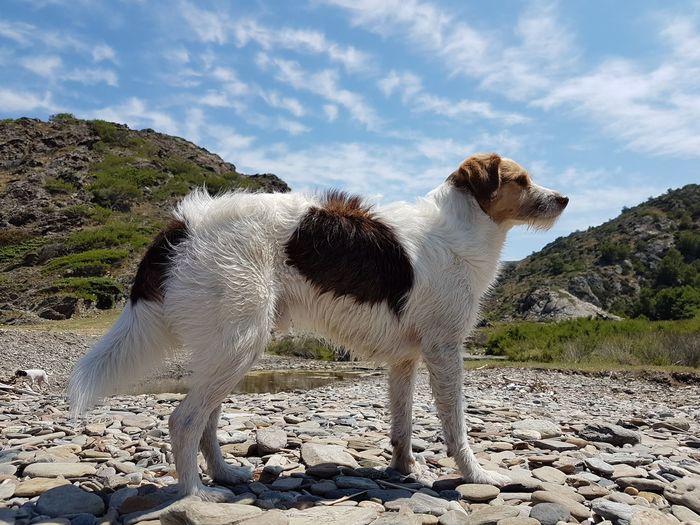 EyeEm Selects Domestic Animals Animal Themes Animal Nature Nature_collection Dog Love DogLove Pasión Por Fotografías❤