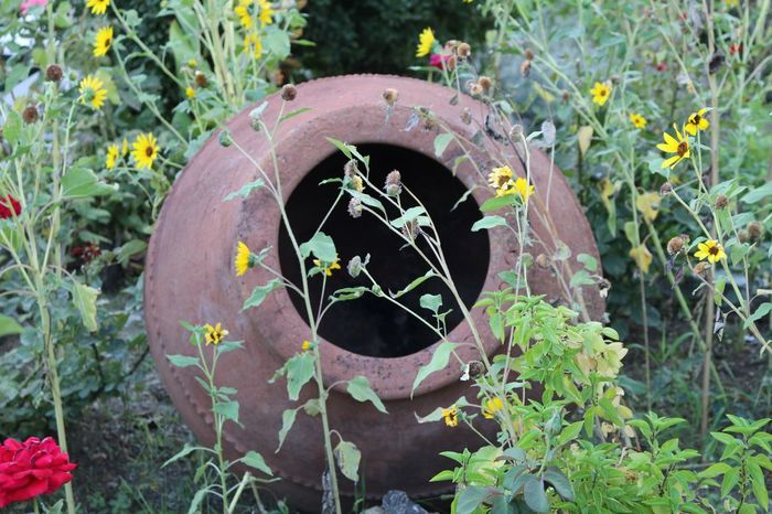Garden Garden Decor Garden Design Ceramic Pot Sun Flowers Plant Cyprus Nature Photography Naturelovers Nature Beauty Nature_collection Natural Beauty Nature Collection Flowers,Plants & Garden Flower Photography Plants And Flowers Garden Photography Garden Flowers Garden Architecture Flowers_collection Nature's Diversities Nature Lover Flowers, Nature And Beauty Naturephotography Nature_perfection