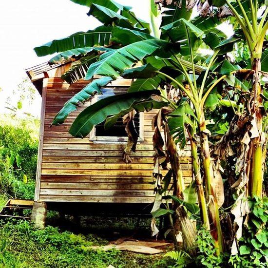 Shack_sniper Islandlife Islandlivity Grenada Iphone4 IPhone Iphoneonly Willis Ourbestshots Instagramhub Instagram