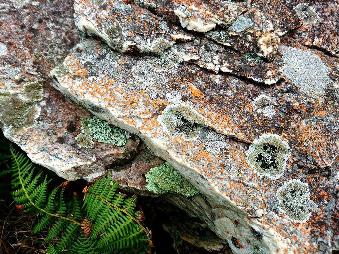 Nature Fynbos Rock Rock Moss Moss Colorful Nature Natures Art