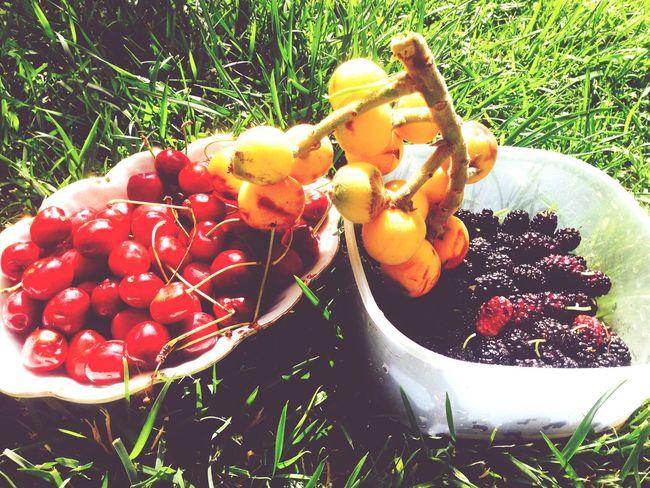 Fruit Fruits Cherry
