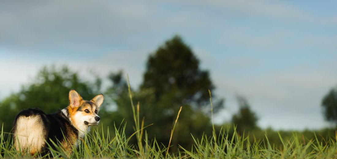 Dog standing on grassy field against sky