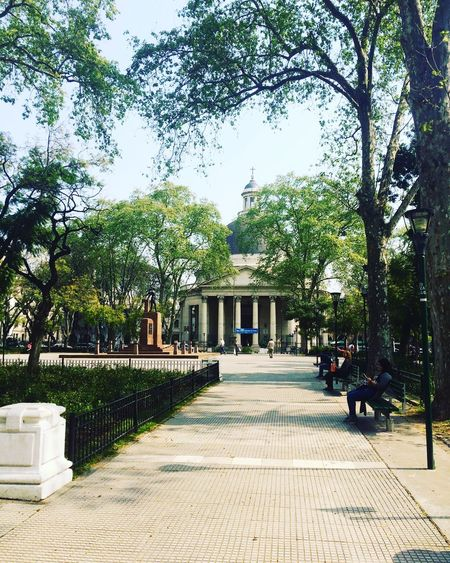 Tree Day Outdoors Architecture No People Built Structure Building Exterior Nature Sky Buenos Aires Argentina Belgrano Laredonda
