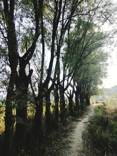 Trees Path Nature Growth Outdoors Peaceful