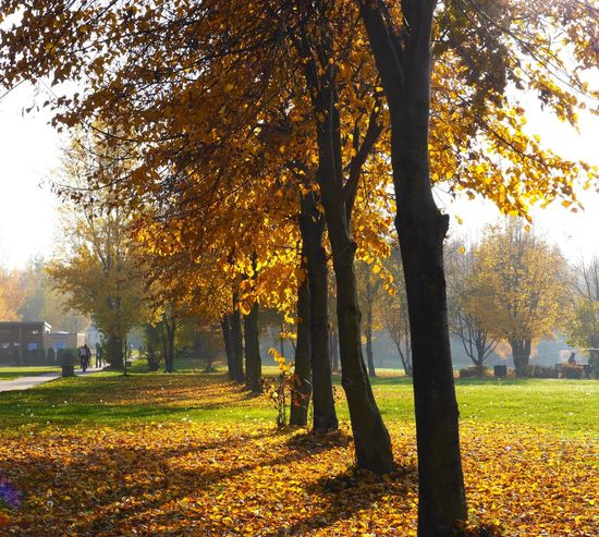 Hey, it's November and nature shows us the most beautiful face With Big Steps To Autumne🍃🍂 Outdoors Eye4photography  Trees Eyem Best Shots Tadaa Community Fall Beauty
