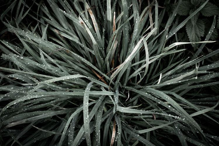 Full frame shot of fresh plants