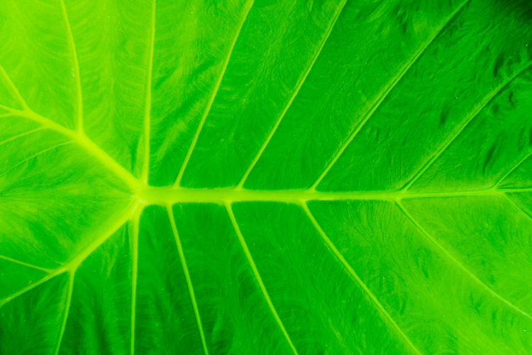 Abstract Abstract Backgrounds Backgrounds Beauty In Nature Botany Close-up Extreme Close-up Freshness Full Frame Green Color Growth Leaf Leaf Vein Leaves Macro Natural Pattern Nature No People Palm Leaf Pattern Plant Plant Part Textured