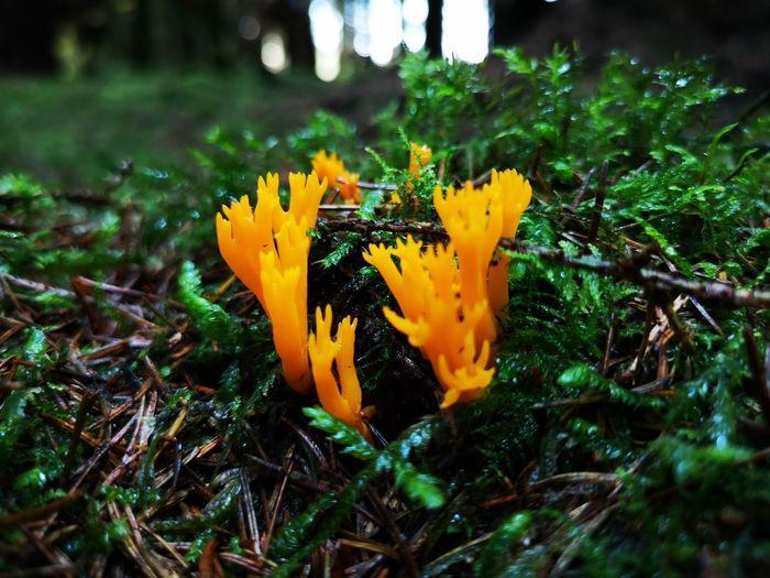 Mushroom Yellow Close-up Plant Grass Fungus