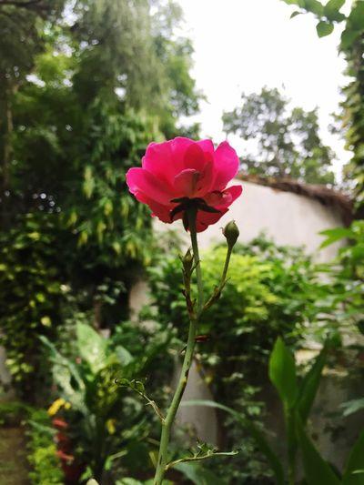 Red Rosé Nature Rosé