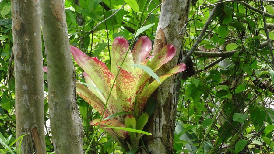 Mangrove of