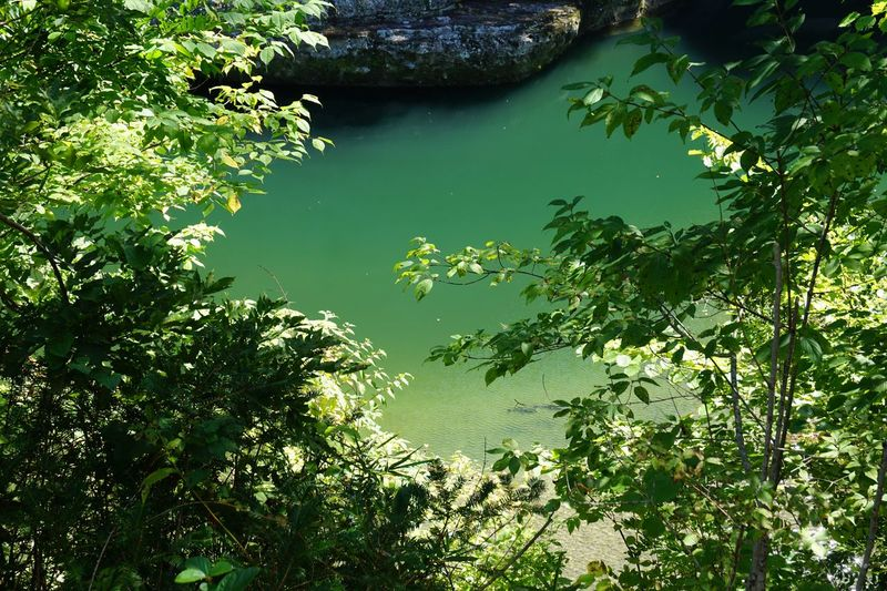 Water Surface Surface Leaves Light And Shadow Water Plant Green Color Tree Lake Nature Tranquility Reflection Forest Sunlight Scenics - Nature