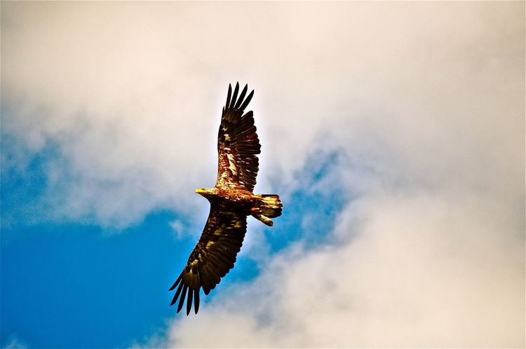 Americaneagle Eagle Photography Photooftheday Explore Dream Discover  Nikon D7100 70-200mm
