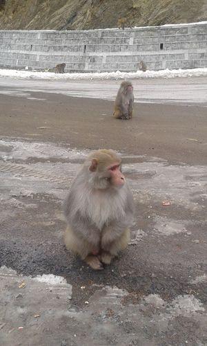 Monkey on the road.. Enjoying Life