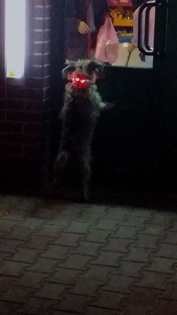Dog Nightphotography Nightnightlife One Person Real People Full Length Lifestyles City Adults Only Leisure Activity Outdoors Day One Woman Only People Young Adult Adult Only Women Human Body Part