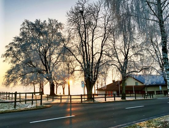 Day Frost Frosty Nature Outdoors Road Sky Sunset Tree