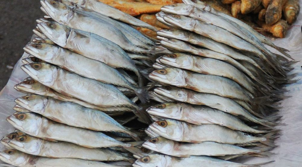 Food Preservation Food Processing Salted Mackerel Close-up Day Ferment Fish Food Food And Drink Freshness Healthy Eating Market No People Outdoors Raw Food Retail  Seafood