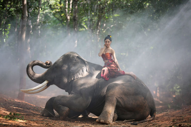 Portrait of young woman sitting on elephant in forest