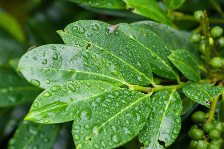Backgrounds Beauty In Nature Close-up Day Dew Focus On Foreground Fragility Freshness Full Frame Green Green Color Growth Leaf Leaf Vein Leaves Natural Pattern Nature No People Outdoors Plant Season  Selective Focus Tranquility Water Weather