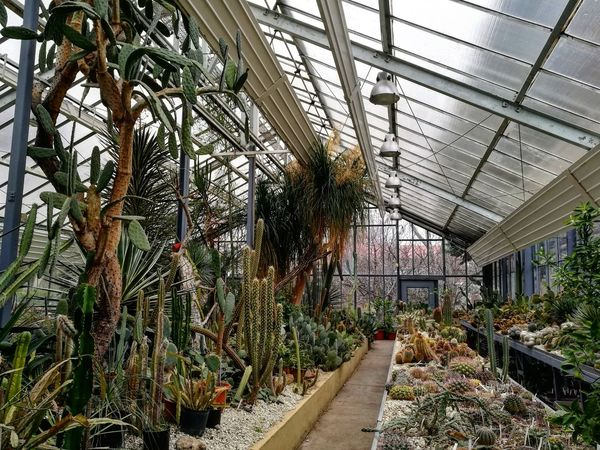 Greenhouse Nature Indoors  Beauty In Nature