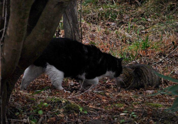 Stray Cat Cat Taking Photos 白黒猫 キジトラ 野良猫 外ニャン Cat Lovers Cat♡ Cats Of EyeEm ラブラブかと思いきや…この後追っかけっこで大騒ぎ?