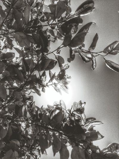 Sunlight Leaves🌿 Beginner Konichiwa
