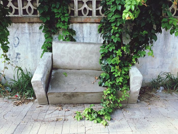 Plant Leaf Architecture Green Color No People Growth Built Structure Outdoors Day Ivy Nature Building Exterior Couch Sofa Abandoned