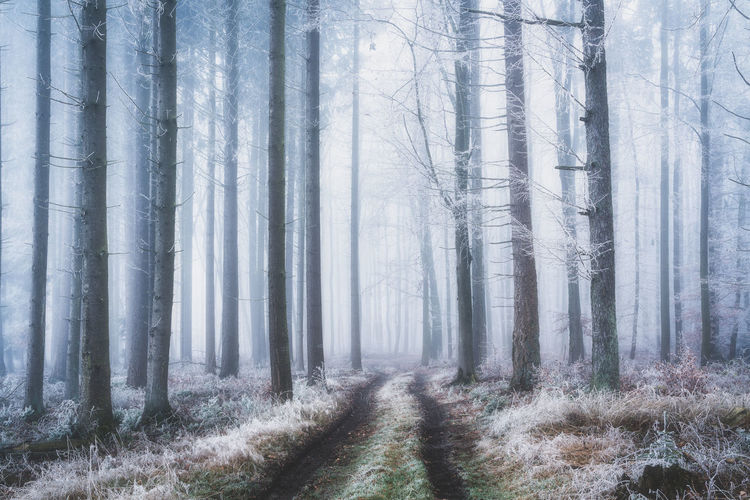 Frozen forest with fog in winter