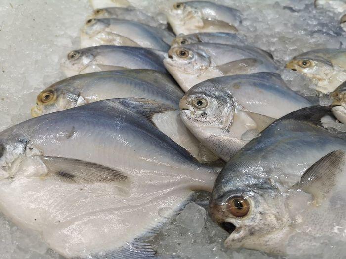 Sea Life Fish