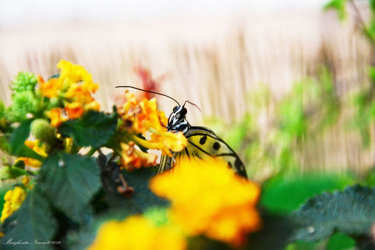 Relaxing Naturephoto Butterfly Sweet Yellow Little Montain  Sunny Day First Eyeem Photo
