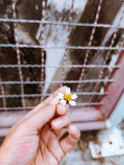 Close-up of hand holding small flower against metal grate