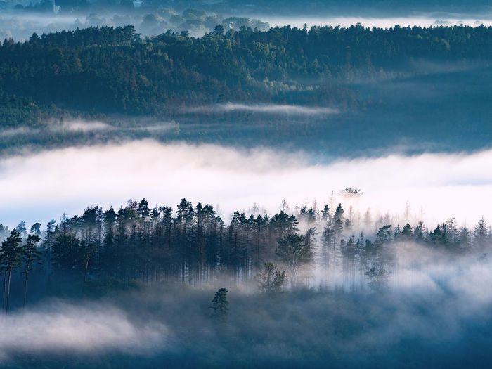Misty foggy autumn landscape with sharp treetops and dark blue hills in forest. misty  valley