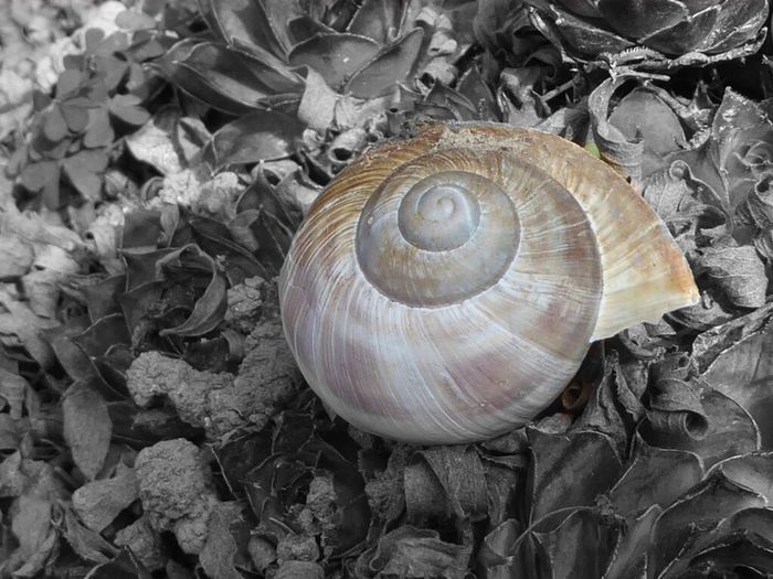 Schneckenhaus Snail Shell Blackandwhite Blackandwhite Photography Nature Nature_collection Taking Photos The Week On Eyem Showcase March