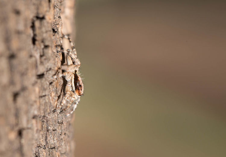 Close-up of spider on tree trunk