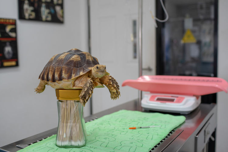 Close-Up Of Tortoise On Container In Hospital