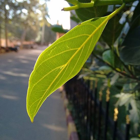 When life gets blurry, adjust your focus Pictureoftheday Picoftheday Photooftheday Focus Nature Photography Nature_perfection Primeshots Explore Neverstopexploring  Justgoshoot Naturelovers Leaf Green Nature Nofilter Noedit Instalike Instalike Nammabengaluru