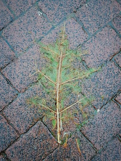 flat X-mas Tree Xmas Tree Flat Lay Flat Street Photography Backgrounds Full Frame Leaf Pattern High Angle View Multi Colored Close-up