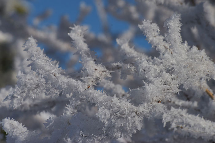Schneekristalle SONY A7ii Schneekristalle Beauty In Nature Close-up Cold Temperature Day Frozen Nature No People Outdoors Sachsen Schneeberg Sky Snow Tranquility Weather Winter