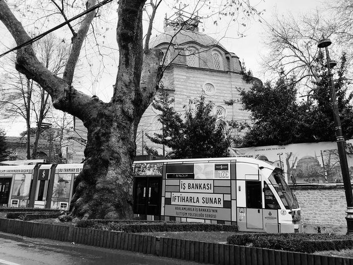 The city train in Istanbul Turkey ♡ Istanbul City IPhoneography Light Rail Train Train View Tree Text Plant Architecture Day Communication Nature No People Outdoors The Street Photographer - 2018 EyeEm Awards The Street Photographer - 2018 EyeEm Awards